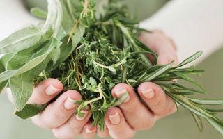 Травы, понижающие давление — лучшие лекарственные растения и сборы