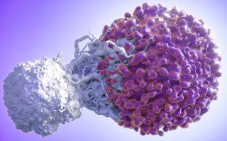 Норма лимфоцитов у женщин по возрасту — таблица