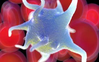 Тромбоциты понижены у ребенка — о чем это говорит, что делать