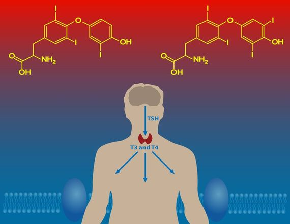 Анализы крови на гормоны щитовидной железы ттг т3 т4