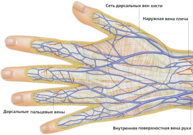Почему лопаются сосуды на пальцах