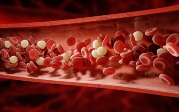 Общий белок в крови понижен: причины, как повысить?