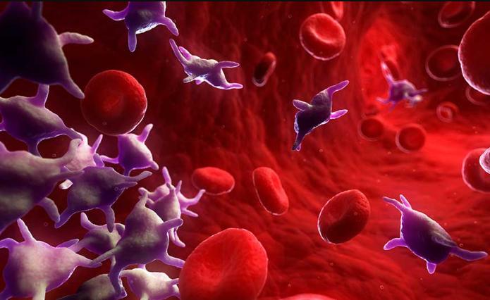Как увеличить тромбоциты в крови народными средствами